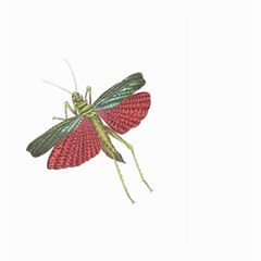 Grasshopper Insect Animal Isolated Large Garden Flag (Two Sides)