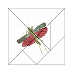 Grasshopper Insect Animal Isolated Acrylic Tangram Puzzle (6  x 6 )