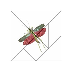Grasshopper Insect Animal Isolated Acrylic Tangram Puzzle (4  x 4 )