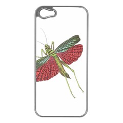 Grasshopper Insect Animal Isolated Apple iPhone 5 Case (Silver)