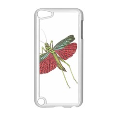 Grasshopper Insect Animal Isolated Apple iPod Touch 5 Case (White)