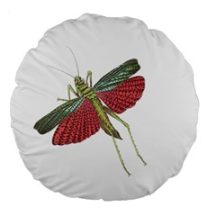 Grasshopper Insect Animal Isolated Large 18  Premium Round Cushions