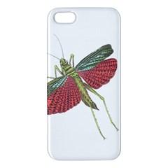 Grasshopper Insect Animal Isolated Apple iPhone 5 Premium Hardshell Case