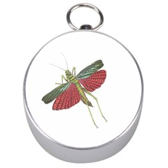 Grasshopper Insect Animal Isolated Silver Compasses