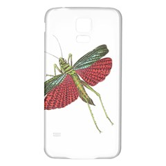 Grasshopper Insect Animal Isolated Samsung Galaxy S5 Back Case (White)