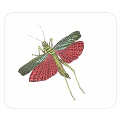 Grasshopper Insect Animal Isolated Double Sided Flano Blanket (Small)