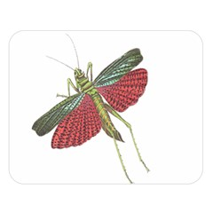 Grasshopper Insect Animal Isolated Double Sided Flano Blanket (Large)