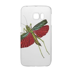 Grasshopper Insect Animal Isolated Galaxy S6 Edge