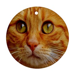 Cat Red Cute Mackerel Tiger Sweet Ornament (Round)