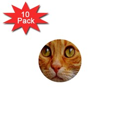 Cat Red Cute Mackerel Tiger Sweet 1  Mini Buttons (10 pack)