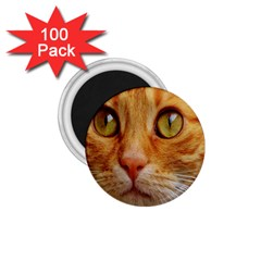 Cat Red Cute Mackerel Tiger Sweet 1.75  Magnets (100 pack)
