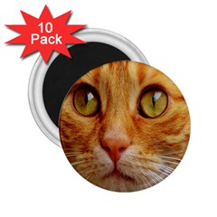 Cat Red Cute Mackerel Tiger Sweet 2.25  Magnets (10 pack)