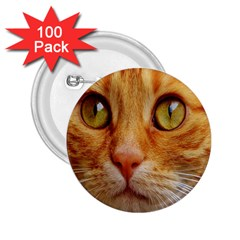 Cat Red Cute Mackerel Tiger Sweet 2.25  Buttons (100 pack)