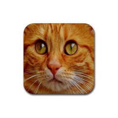 Cat Red Cute Mackerel Tiger Sweet Rubber Square Coaster (4 pack)