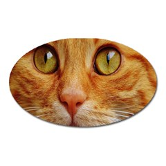 Cat Red Cute Mackerel Tiger Sweet Oval Magnet