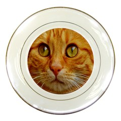 Cat Red Cute Mackerel Tiger Sweet Porcelain Plates