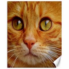 Cat Red Cute Mackerel Tiger Sweet Canvas 16  x 20