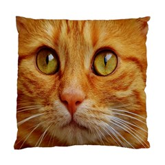 Cat Red Cute Mackerel Tiger Sweet Standard Cushion Case (Two Sides)