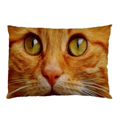 Cat Red Cute Mackerel Tiger Sweet Pillow Case (Two Sides)