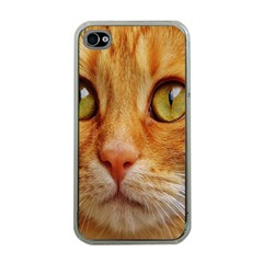 Cat Red Cute Mackerel Tiger Sweet Apple Iphone 4 Case (clear)