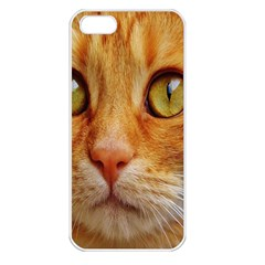 Cat Red Cute Mackerel Tiger Sweet Apple Iphone 5 Seamless Case (white)