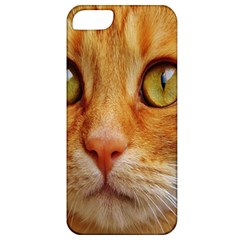 Cat Red Cute Mackerel Tiger Sweet Apple iPhone 5 Classic Hardshell Case