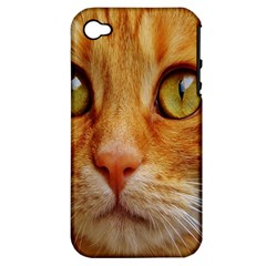 Cat Red Cute Mackerel Tiger Sweet Apple iPhone 4/4S Hardshell Case (PC+Silicone)