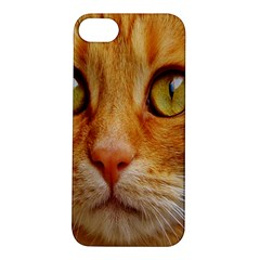 Cat Red Cute Mackerel Tiger Sweet Apple iPhone 5S/ SE Hardshell Case