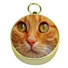 Cat Red Cute Mackerel Tiger Sweet Gold Compasses