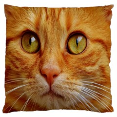 Cat Red Cute Mackerel Tiger Sweet Standard Flano Cushion Case (Two Sides)