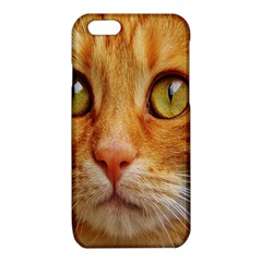 Cat Red Cute Mackerel Tiger Sweet iPhone 6/6S TPU Case