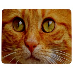 Cat Red Cute Mackerel Tiger Sweet Jigsaw Puzzle Photo Stand (Rectangular)