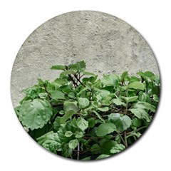 Plants Against Concrete Wall Background Round Mousepads
