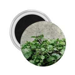 Plants Against Concrete Wall Background 2.25  Magnets