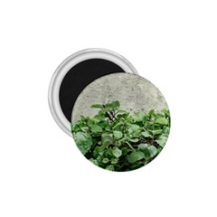 Plants Against Concrete Wall Background 1.75  Magnets