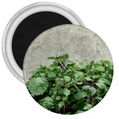 Plants Against Concrete Wall Background 3  Magnets