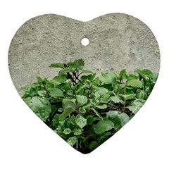 Plants Against Concrete Wall Background Ornament (Heart)