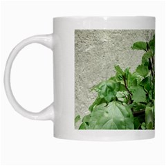Plants Against Concrete Wall Background White Mugs
