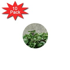 Plants Against Concrete Wall Background 1  Mini Buttons (10 pack)