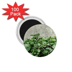 Plants Against Concrete Wall Background 1.75  Magnets (100 pack)