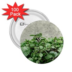 Plants Against Concrete Wall Background 2.25  Buttons (100 pack)