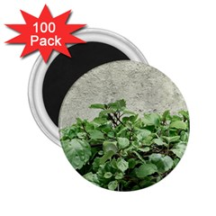Plants Against Concrete Wall Background 2.25  Magnets (100 pack)