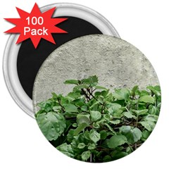 Plants Against Concrete Wall Background 3  Magnets (100 pack)
