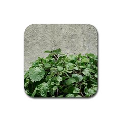 Plants Against Concrete Wall Background Rubber Coaster (Square)