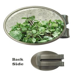 Plants Against Concrete Wall Background Money Clips (Oval)