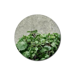 Plants Against Concrete Wall Background Rubber Round Coaster (4 pack)