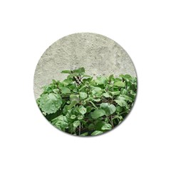 Plants Against Concrete Wall Background Magnet 3  (Round)