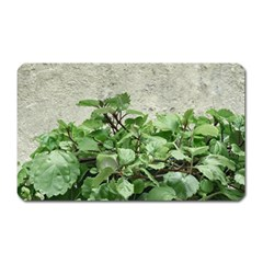 Plants Against Concrete Wall Background Magnet (Rectangular)