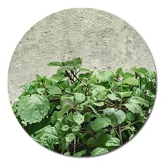 Plants Against Concrete Wall Background Magnet 5  (Round)