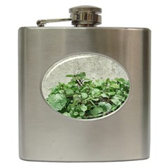 Plants Against Concrete Wall Background Hip Flask (6 oz)